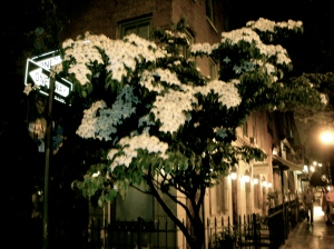 Summer rain smells good even in New York